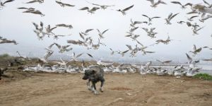 Büyükşehir ekipleri, sokak hayvanları için mama gezdiriyor