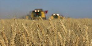 Buğday verimi için çiftçiye gübreleme ve süne uyarısı