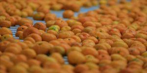 Rusya'ya mandarin ihracatı ilk çeyrekte yüzde 49 arttı