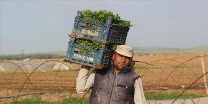 Sokağa çıkma kısıtlamasından muaf tutulan çiftçiler üretime devam ediyor