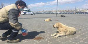 Sokağa çıkma kısıtlaması uygulanan İstanbul'da sokak hayvanları unutulmadı