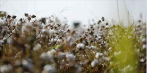 Güneydoğu'nun bereketli toprakları pamuk tohumuyla buluşuyor