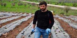 Üniversite öğrencisi, girişimcilik dersi ödevinden yola çıkıp köyünde çilek tarlası oluşturdu
