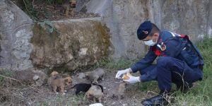 Antalya'da jandarmadan aç kalan köpek ve yavrularına şefkat eli