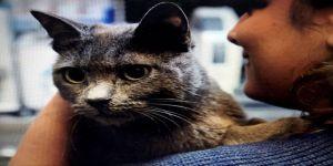Elektrik akımına kapılan kediye 'protez damak' yaptılar