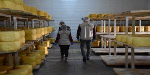 Karslı üreticiler salgın günlerinde coğrafi işaretli Kars kaşarı siparişlerini yetiştiremiyor