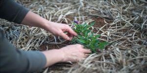 Bahçede zaman geçirmek akıl ve beden sağlığını olumlu etkiliyor