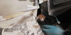 Havalandırma boşluğuna düşen kedi yavrusu, duvar kırılarak kurtarıldı