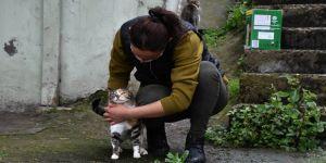 Felçli kediden etkilendi, sokak hayvanlarına 'anne şefkati' ile bakıyor