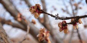 Meteorolojiden Doğu Anadolu'da 6 ilde 'zirai don' uyarısı