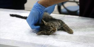 Japon kadın, kediyi tedavi eden Türkiye'deki hastaneye 2 bin lira bağışladı