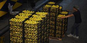 Tarım ve Orman Bakanlığından 10 bin ton limon ihracatına izin