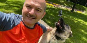 İçişleri Bakanı Süleyman Soylu sahiplendiği sokak köpeklerinin fotoğraflarını paylaştı