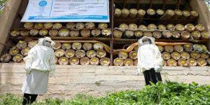 Vanlı kadın arıcı, ürettiği karakovan balıyla arıcılıkta söz sahibi olmayı hedefliyor