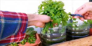 Lübnanlılar ekonomik kriz nedeniyle kentteki alanları sebze bahçesine dönüştürüyor
