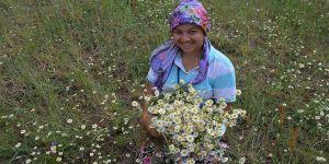 Manisa dağlarından köylüye 'çiçek gibi' kazanç