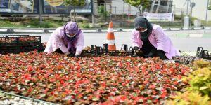 Mevsimlik Çiçek Dikimi ve Yabani Ot Temizliği Devam Ediyor
