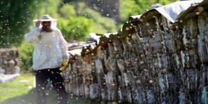 Bitlisli arıcılar kara kovan balı için yaylalara çıkmaya hazırlanıyor