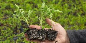 Tarım ve Orman Bakanlığından İYİ Partili Türkkan'ın 'tohumla ilgili' iddialarına yanıt