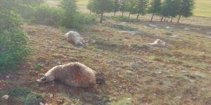 Burdur'da yıldırım isabet eden 13 koyun telef oldu