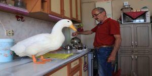 En yakın arkadaşı, ördeği 'Pamuk'
