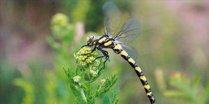 Munzur Vadisi Milli Parkı doğal güzelliğiyle göz kamaştırıyor