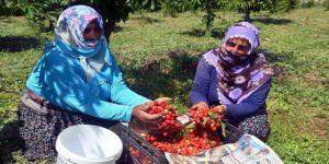 Muş'ta 72 yaşındaki Saliha Yuvanç devlet desteğiyle kiraz üreticisi oldu