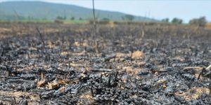 Çanakkale'deki orman yangınına tarım arazisinde yakılan ateşin neden olduğu iddiası araştırılıyor