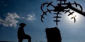 Kars'ta kışı uzun geçiren çiftçilerin ot biçme mesaisi başladı