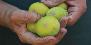 Emekli öğretmen doğaya olan özlemini ekolojik tarımla gideriyor