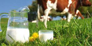 Süt ve Süt Ürünleri Üretimi,sonuçları yayınlandı