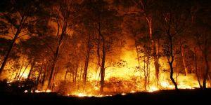 Türkiye'de yanan orman alanların %98'i insan kaynaklı
