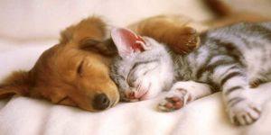 Uygun Fiyatlı ND Kedi Köpek Maması