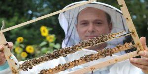 Bitkilerin tozlaşması için aldığı arılar ailesine gelir kapısı oldu