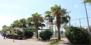 500 Palmiye ağacına bakım