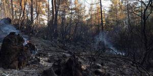 Burdur'daki orman yangınının mangaldan çıktığı tespit edildi
