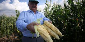 120 dönüm araziye ektiği mısırla belediyeye ek kaynak oluşturacak