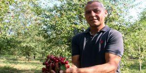 Yem bitkisi yerine vişne ve kiraz ağacı dikti, tonlarca ürünü dalından satıyor