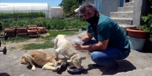 Veteriner hekim sokak hayvanlarını 'askıda mama' uygulamasıyla besliyor