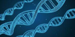 Erkek kısırlığıyla ilişkili yeni bir gen tanımlandı