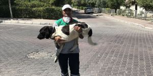 Üç bacaklı sokak köpeği temizlik işçisini 5 yıldır yalnız bırakmıyor