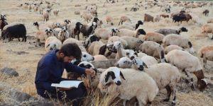 Şanlıurfa'da çoban, Kocaeli'de hekim adayı