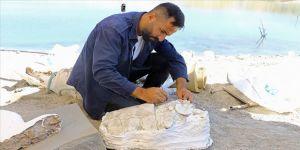 7,5 milyon yıllık kaplumbağa ve fil dişi fosiline kuyumcu titizliği