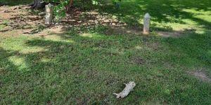 Bosna Hersek'teki bir cami avlusuna domuz leşi bırakıldı