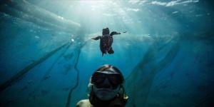 Deniz kaplumbağaları 'Patara, Likya ve Belkıs', türlerinin geleceğine de hizmet edecek