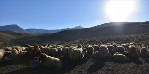 Hakkari yaylalarında göçerlerin dönüş hazırlığı başladı