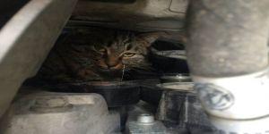 Çayırovada otomobilin motor kısmına sıkışan kedi kurtarıldı