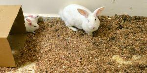 Bilime hizmet eden deney hayvanlarına özel bakım