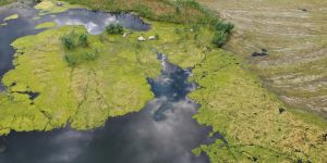 Ağrı Dağı Milli Parkı'nda oluşan yosunlaşma havadan görüntülendi