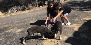 Kız kardeşler bileklik satarak sokak hayvanlarına yiyecek alıyor